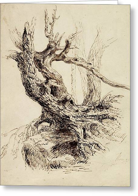 Bare Trees Drawings Greeting Cards - Gnarled Tree Trunk Greeting Card by Thomas Cole