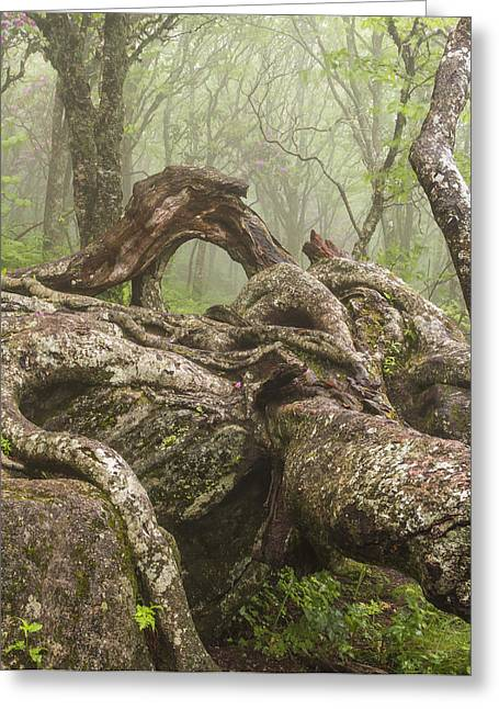 Gnarly Greeting Cards - Gnarly Old Tree in Fog Along the Blue Ridge Parkway Greeting Card by Bill Swindaman