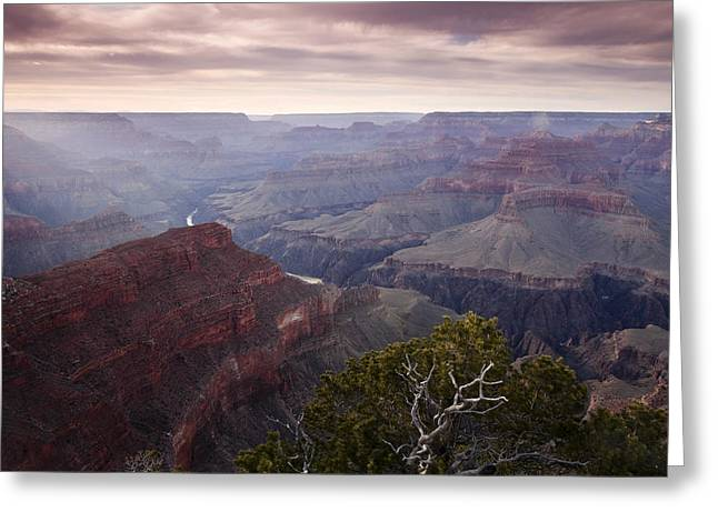 Gnarly Tree In The Canyon Greeting Card by Andrew Soundarajan