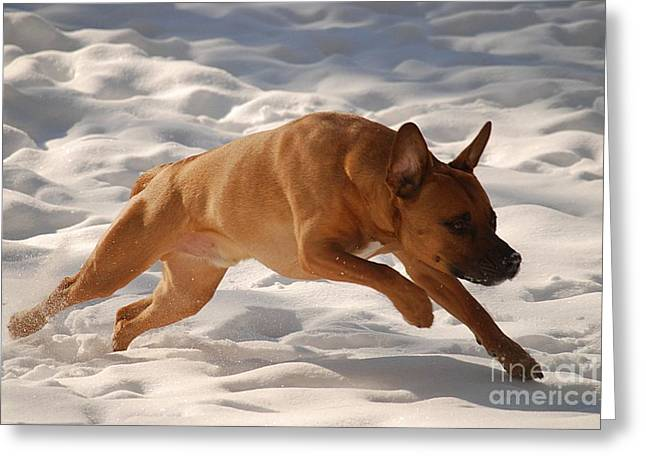 Dogs In Snow. Greeting Cards - Go Greeting Card by Crissy Sherman