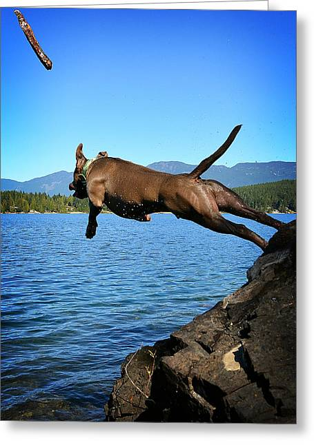 Diving Dog Greeting Cards - Go for it Greeting Card by Deanna Maxwell