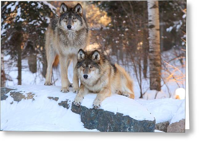 Nature Center Photographs Greeting Cards - Go Get Him Greeting Card by Gerry Sibell