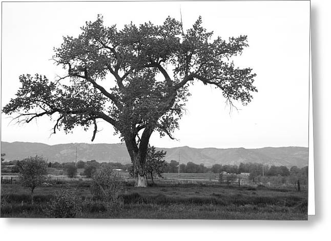 Goddess Tree 3 Greeting Card by Matthew Angelo