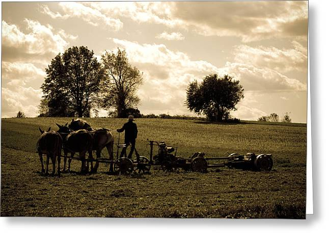 Amish Farms Greeting Cards - Gods Country Greeting Card by Trish Tritz