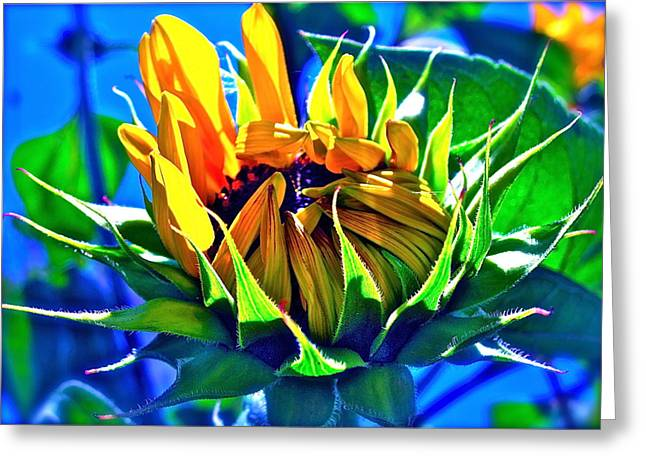 Floral Photographs Greeting Cards - Gods Creation Greeting Card by Gwyn Newcombe