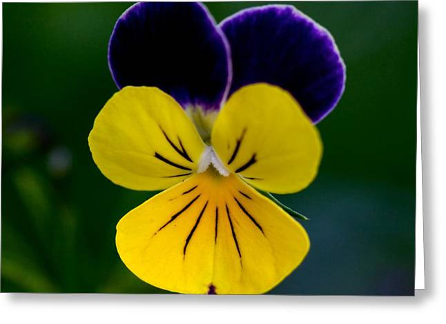 Floral Photographs Greeting Cards - Gods Creation Greeting Card by Robert Pearson