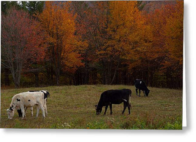 Fall Photographs Greeting Cards - Gods creatures enjoying the view Greeting Card by Robert  Torkomian