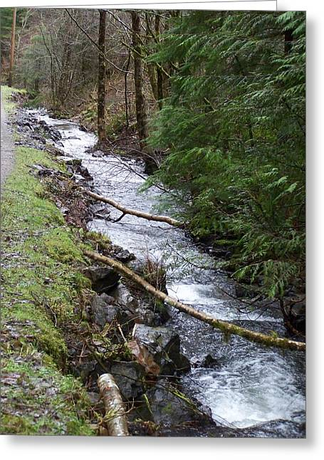 Stream Pyrography Greeting Cards - Going Upstream Greeting Card by Laurie Kidd