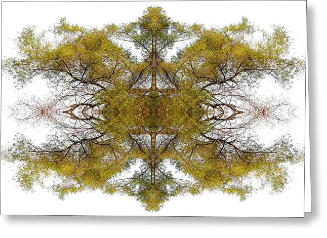 Double Image Greeting Cards - Gold Dust Greeting Card by Debra and Dave Vanderlaan