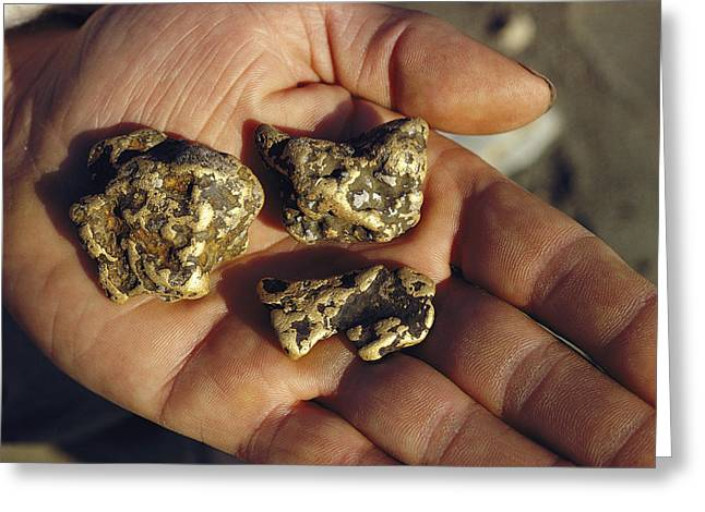 Gold Nuggets Mined In Alaska Greeting Card by George F. Mobley