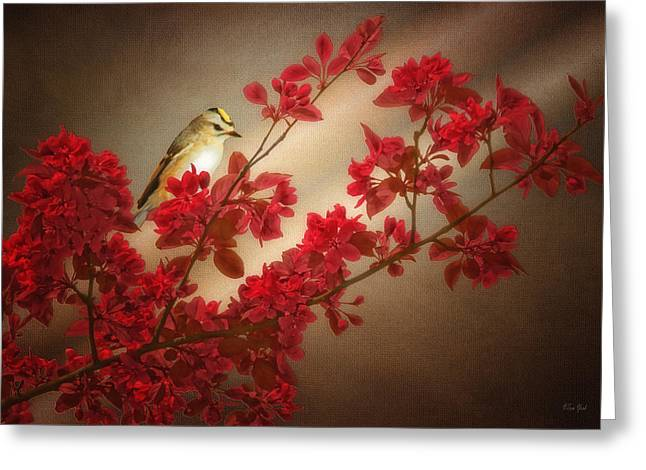 Tom York Images Greeting Cards - Goldcrest On A Branch Greeting Card by Tom York Images