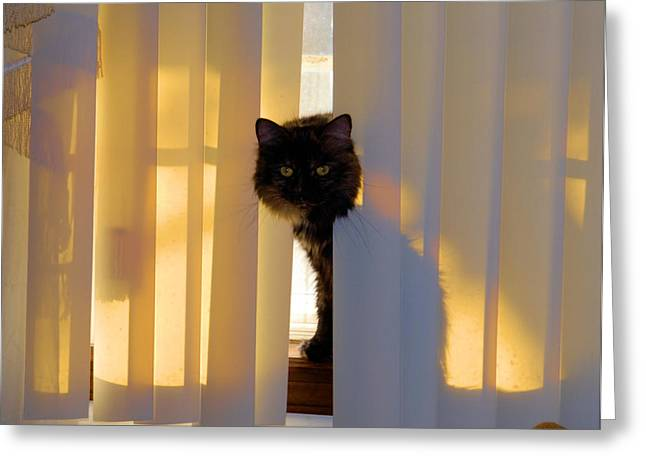 Pictures Of Cats Greeting Cards - Golden Accents Greeting Card by Cheryl Poland