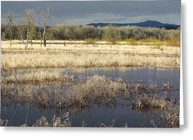 Wildlife Refuge. Greeting Cards - Golden Afternoon Greeting Card by Angie Vogel