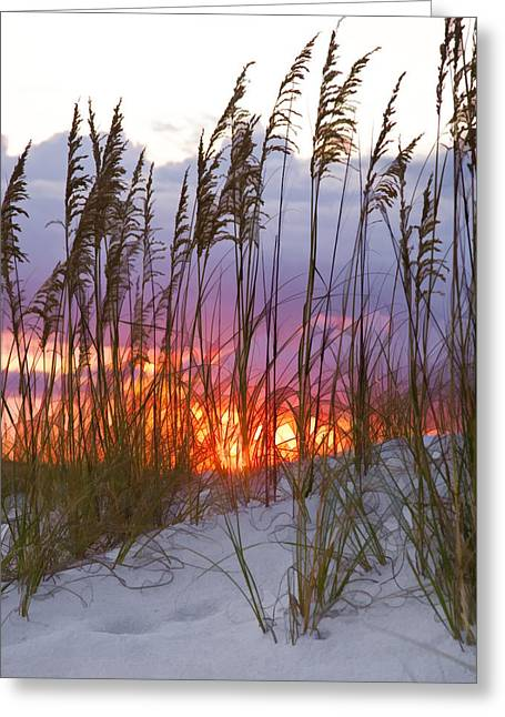 Sea Oats Greeting Cards - Golden Amber Greeting Card by Janet Fikar