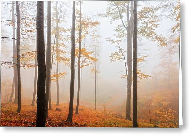 Balkan Greeting Cards - Golden Autumn Forest Greeting Card by Evgeni Dinev