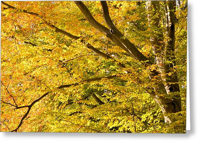 J.d. Grimes Greeting Cards - Golden Autumn Greeting Card by JD Grimes