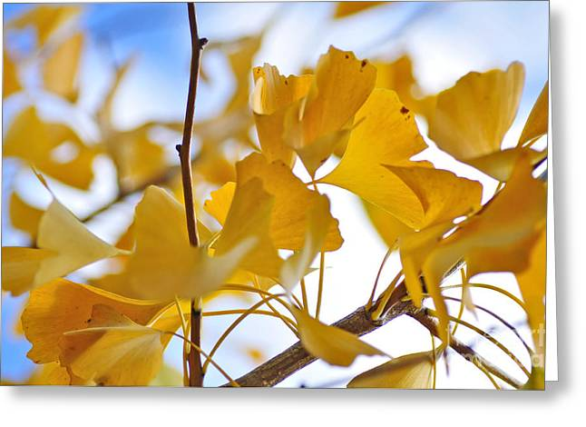 Golden Autumn Greeting Card by Kaye Menner