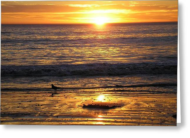 Horse Portrait Photographs Posters Greeting Cards - Golden Beach Greeting Card by J Perez