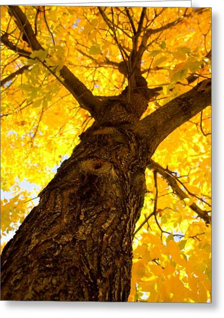 Striking Images Greeting Cards - Golden Climb Greeting Card by James BO  Insogna