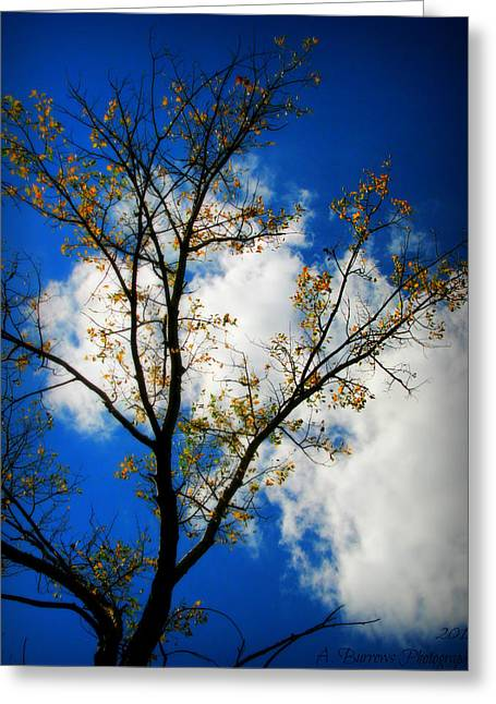 Prescott Greeting Cards - Golden Cottonwood and Arizona Skies Greeting Card by Aaron Burrows