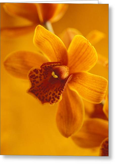 Featured Art Greeting Cards - Golden Cymbidian Orchid Greeting Card by Kathy Yates