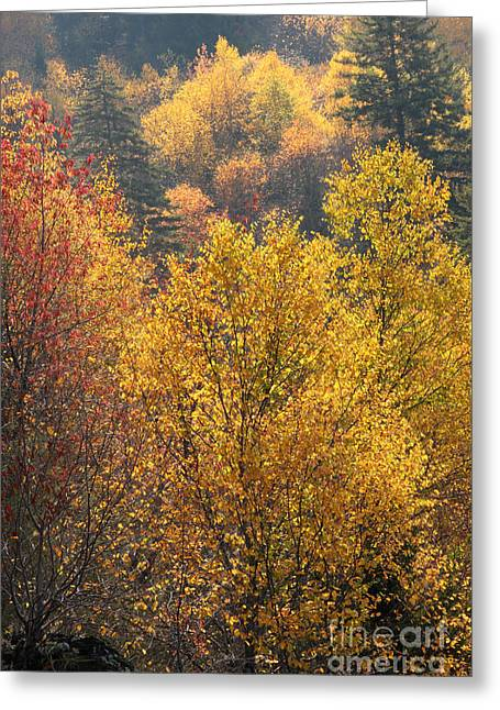 Smokey Mountain Drive Greeting Cards - Golden Days Greeting Card by Gary L Suddath