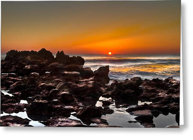 Photogaphy Greeting Cards - Golden Greeting Card by Debra and Dave Vanderlaan