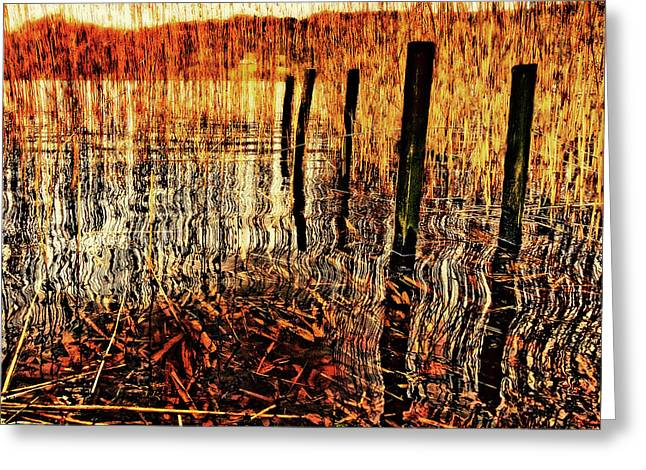 Reed Bed Greeting Cards - Golden Decay Greeting Card by Meirion Matthias