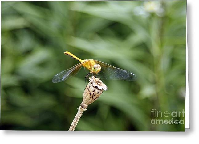 Golden Dragonfly Greeting Card by Yumi Johnson