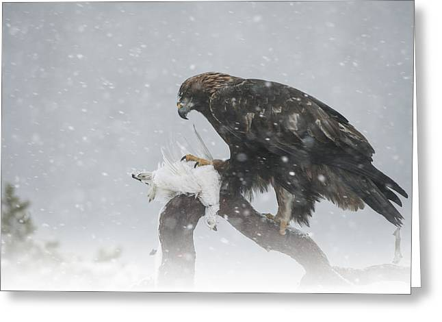 Golden Eagle Greeting Card by Andy Astbury