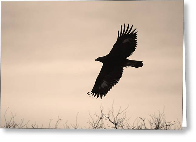 Eagle In Flight Greeting Cards - Golden Eagle Greeting Card by Ernie Echols