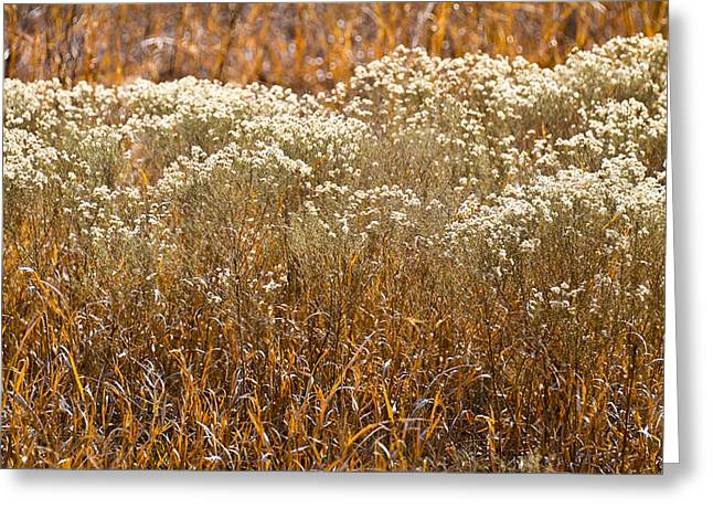 Golden Marsh Greeting Cards - Golden Field of Winter Greeting Card by Carolyn Marshall