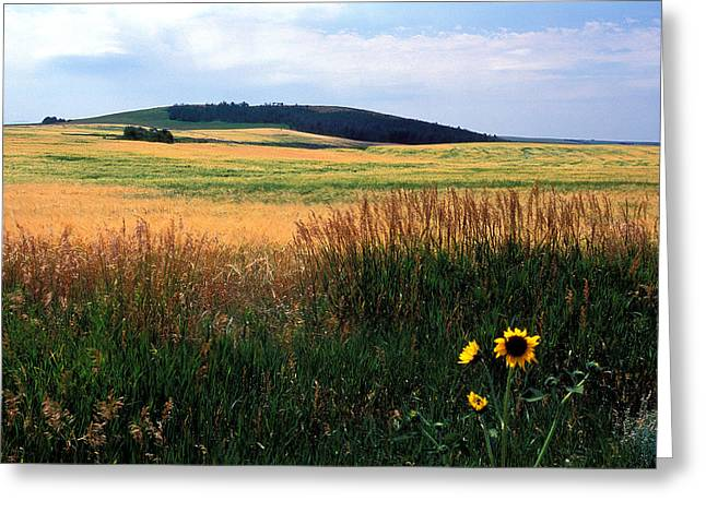 Landscape Framed Prints Greeting Cards - Golden Fields Forever Greeting Card by Kathy Yates