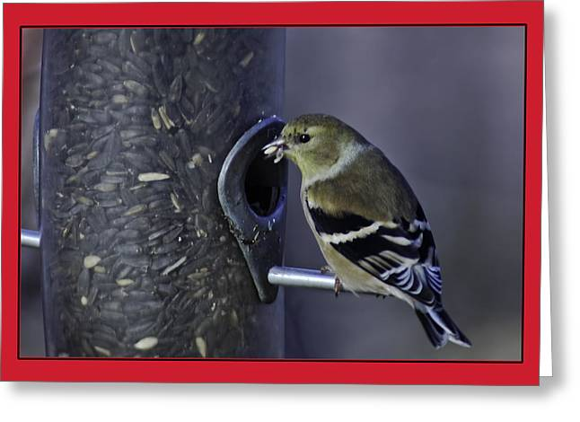 Finch Greeting Cards - Golden Finch at the feeder Greeting Card by LeeAnn McLaneGoetz McLaneGoetzStudioLLCcom