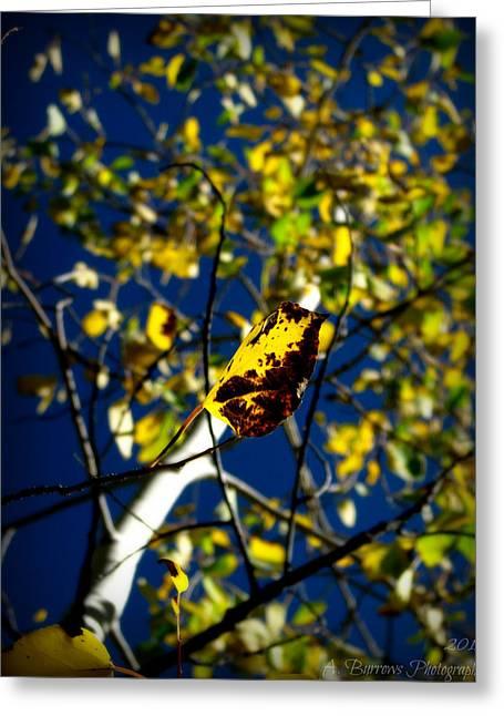 Prescott Greeting Cards - Golden Foliage Near Prescott Greeting Card by Aaron Burrows