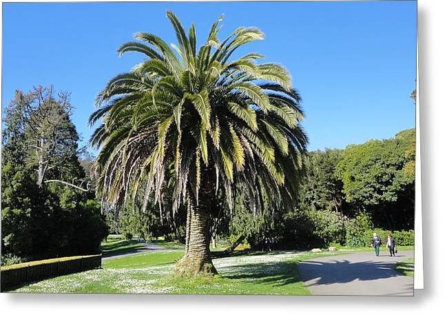 Golden Gate Park  Greeting Card by Eliot Jenkins
