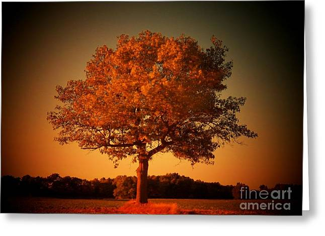 Rural Indiana Greeting Cards - Golden Glow Greeting Card by Joyce Kimble Smith