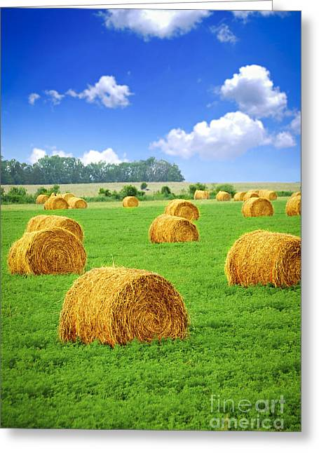 Meadow Photographs Greeting Cards - Golden hay bales in green field Greeting Card by Elena Elisseeva