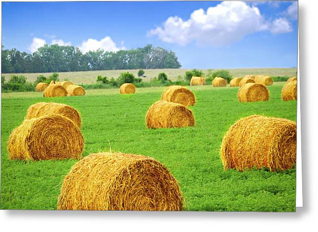 Golden hay bales in green field Greeting Card by Elena Elisseeva