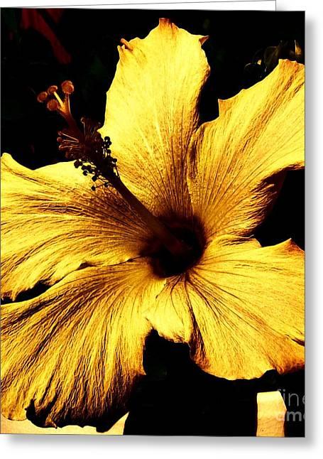 Floral Digital Art Greeting Cards - Golden Hibiscus Greeting Card by Marsha Heiken