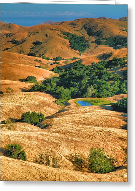 Golden Hills II Greeting Card by Steven Ainsworth