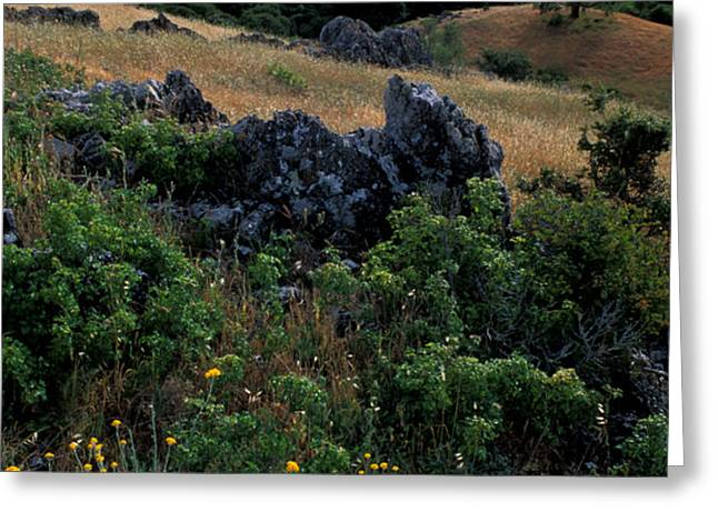 Golden Hills of Summer Greeting Card by Kathy Yates
