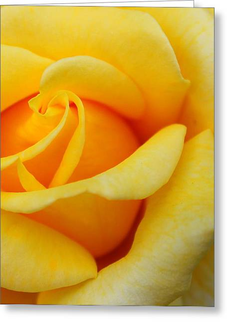 Yellow Flower Scent Greeting Cards - Golden Lady Greeting Card by Sonja Bonitto