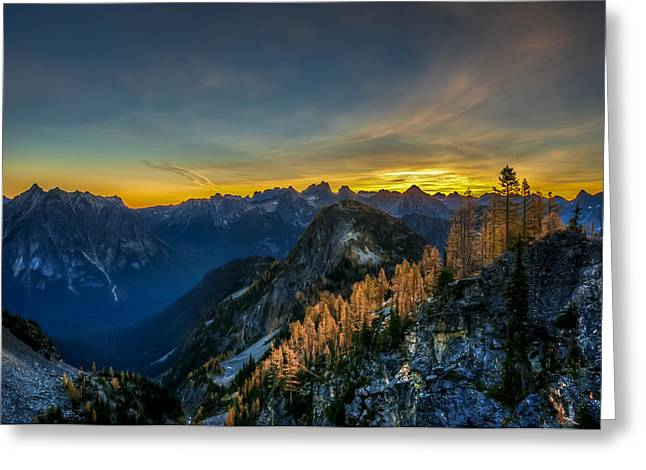 Golden Larch Greeting Card by Ian Stotesbury