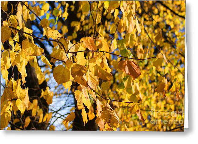 Autumn Art Greeting Cards - Golden leaves Greeting Card by Carol Lynch