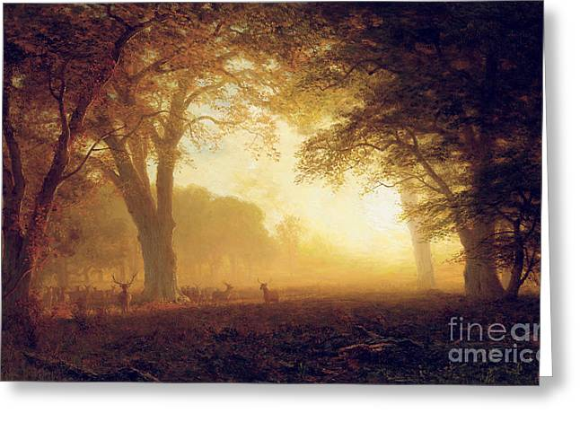 Gloom Greeting Cards - Golden Light of California Greeting Card by Albert Bierstadt
