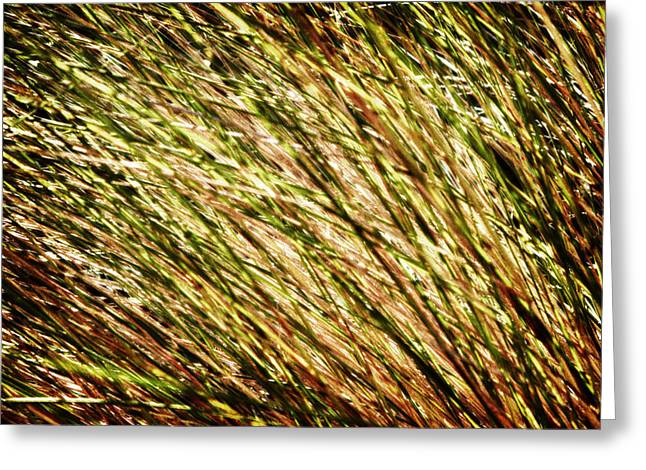 No Limits Greeting Cards - Golden Light Greeting Card by Skip Nall