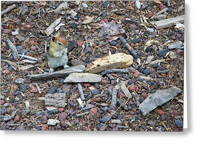 Chipper Greeting Cards - Golden Mantled Ground Squirrel Greeting Card by LeeAnn McLaneGoetz McLaneGoetzStudioLLCcom