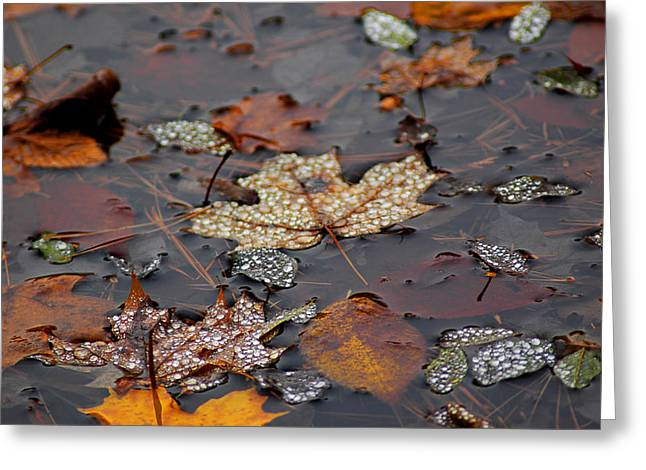 Golden Maple Dew Drops Greeting Card by LeeAnn McLaneGoetz McLaneGoetzStudioLLCcom