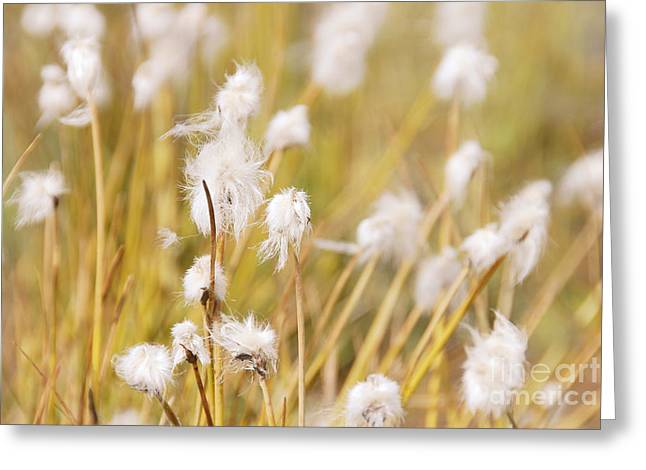 Zermatt Greeting Cards - Golden Meadow Greeting Card by Ivy Ho